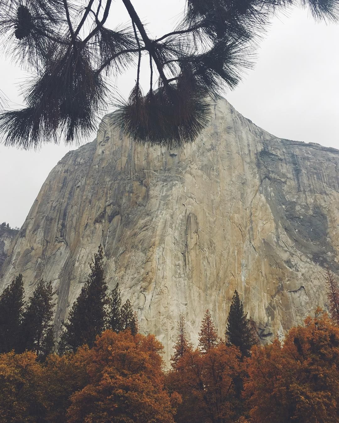 El Capitan, Yosemite National Park   See this Instagram photo by @honestmag • 52 likes