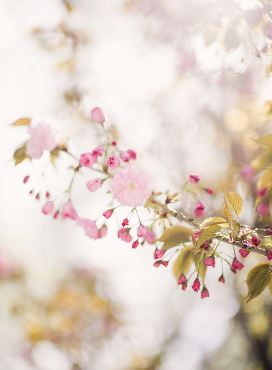 Springtime Wedding In Brooklyn Beautiful Flowers Pretty Flowers Sakura Cherry Blossom