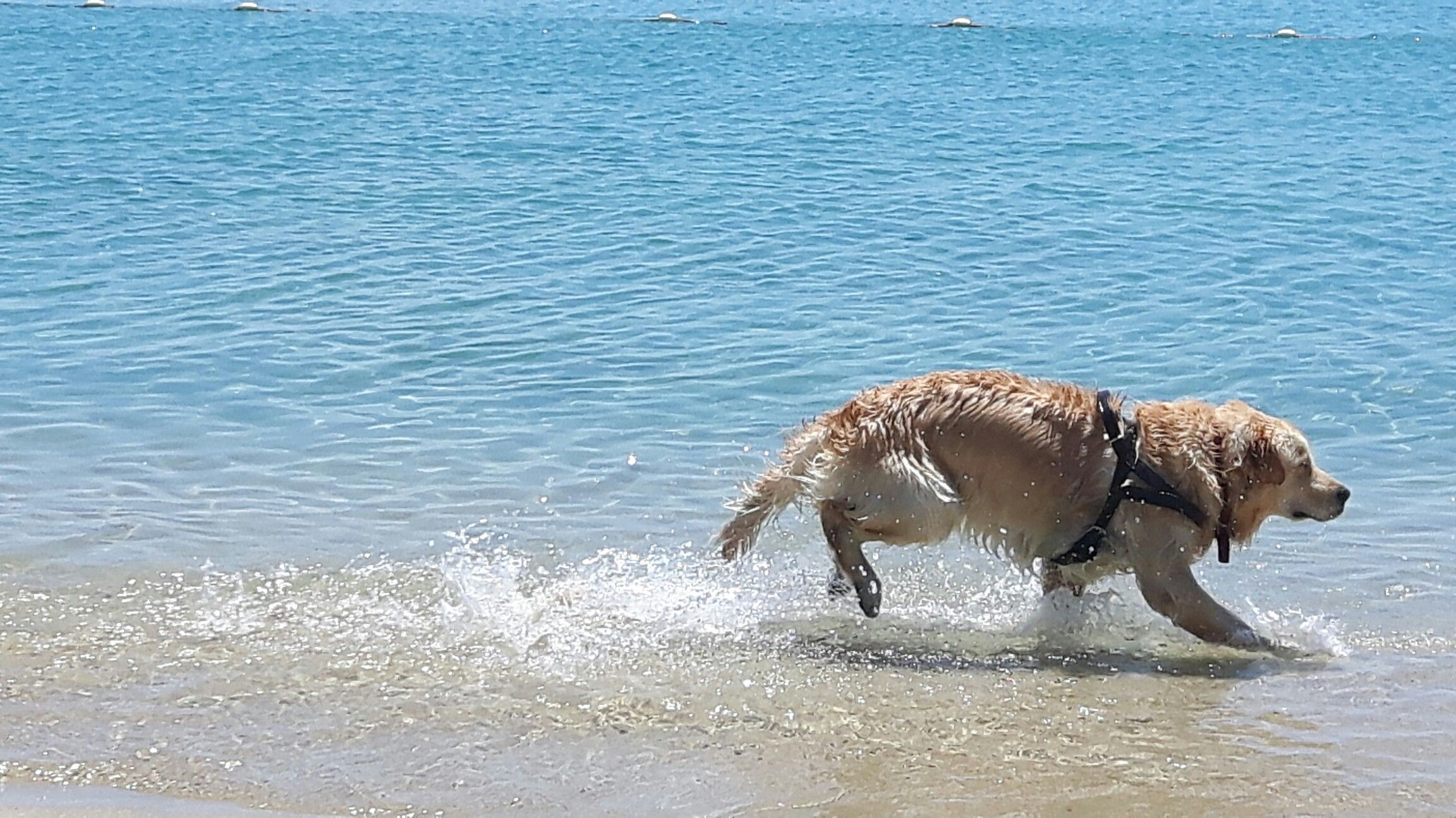 Scoobydoo in The sea