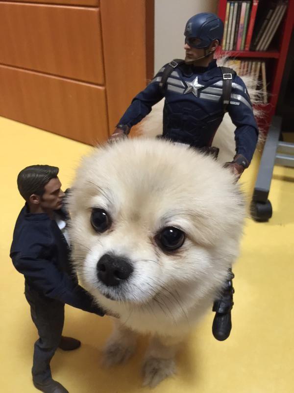 おっさんフィギュアに囲まれ解せぬ表情の犬wwwwwwwwww