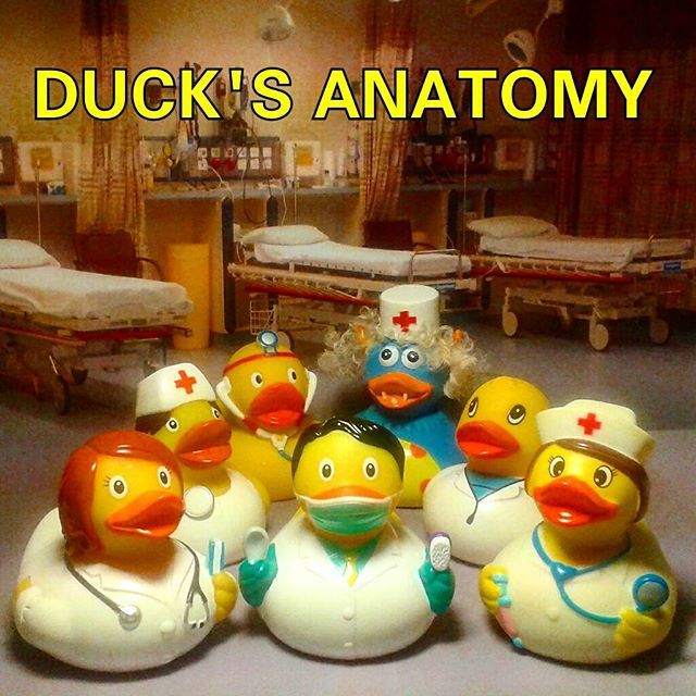 The highly realistic hospital drama Duck\'s Anatomy returns with all ...