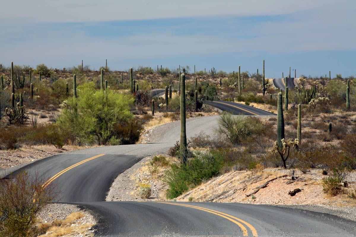 Desert road: Organ Pipe Cactus National Monument, Arizona