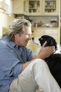 A Dog Year Celebrity dogs, Jeff bridges, Border collie