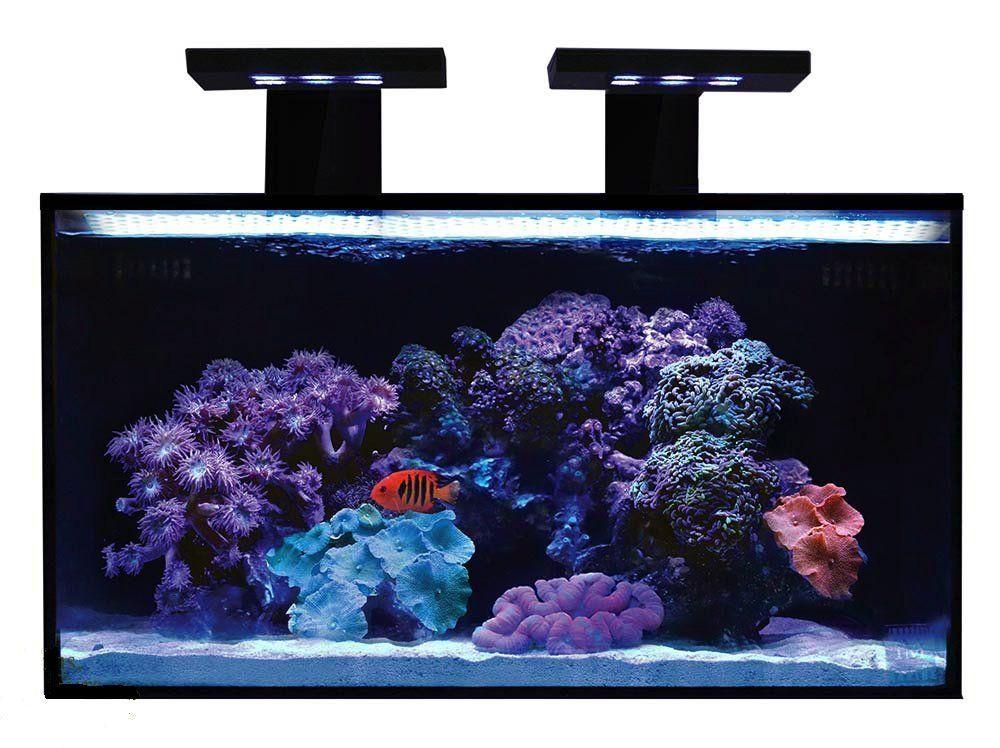 Amazon Com Innovative Marine Nuvo Fusion Nano 20 Gallon Premium Starter Kit Pet Supplies Nano Aquarium Aquarium 20 Gallon Aquarium
