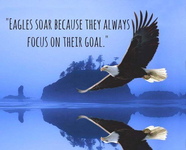 Eagle Quotes Căutare Google Eagle Images Eagle Pictures Bald Eagle