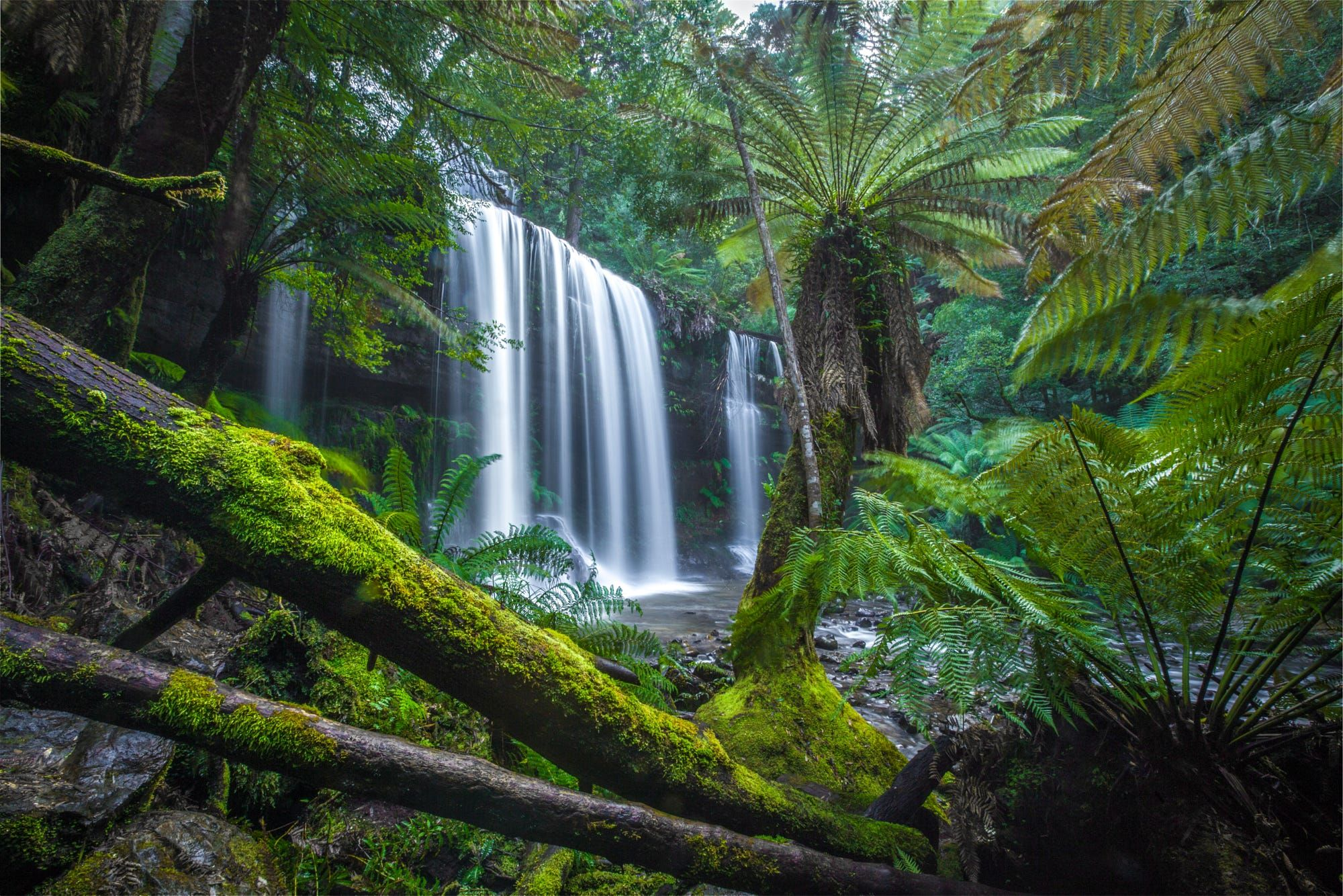 Russell Falls Ferns by Robert Downie on 500px
