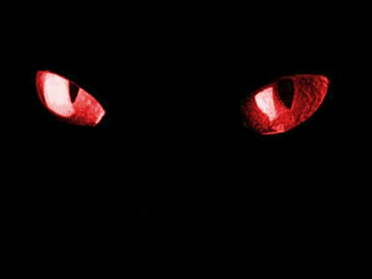 Cat Eyes By Zellzgoddess Deviantart Com Eyes Wallpaper Red Eyes Wolf With Red Eyes