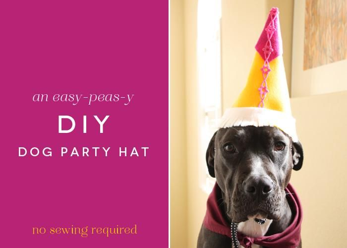 DIY Party Hats Dog Hat