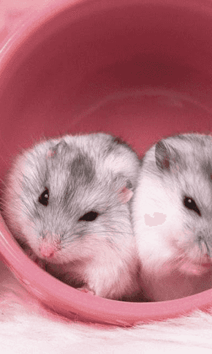 Best Hd Cute Hamster Backgrounds Br This Is An Amazing Collection Of Beautiful Cute Hamster Wallpapers Br If You Enjo Hamster Wallpaper Cute Hamsters Hamster