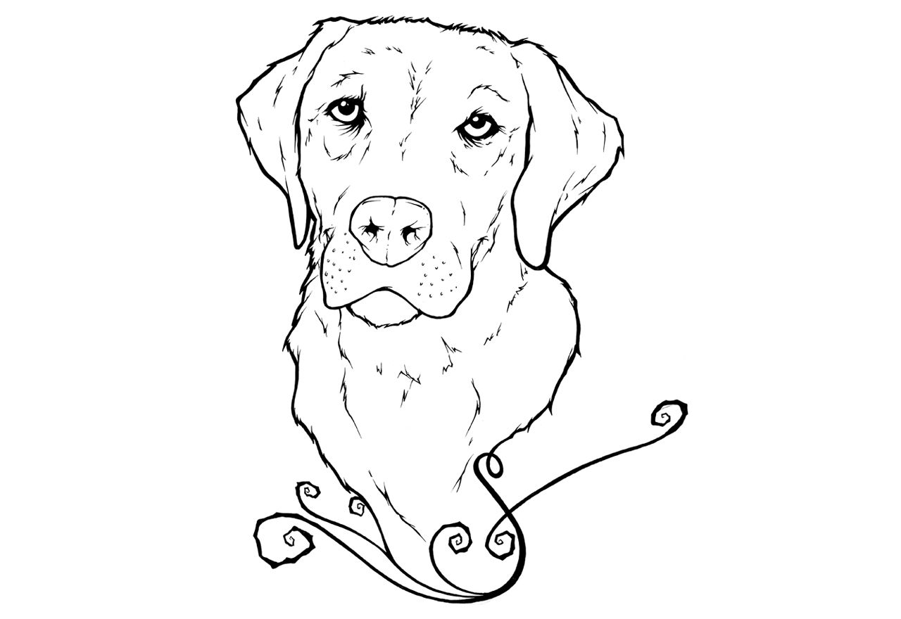 Yellow Lab Puppy Coloring Pages Labrador Puppies Colouring Pages