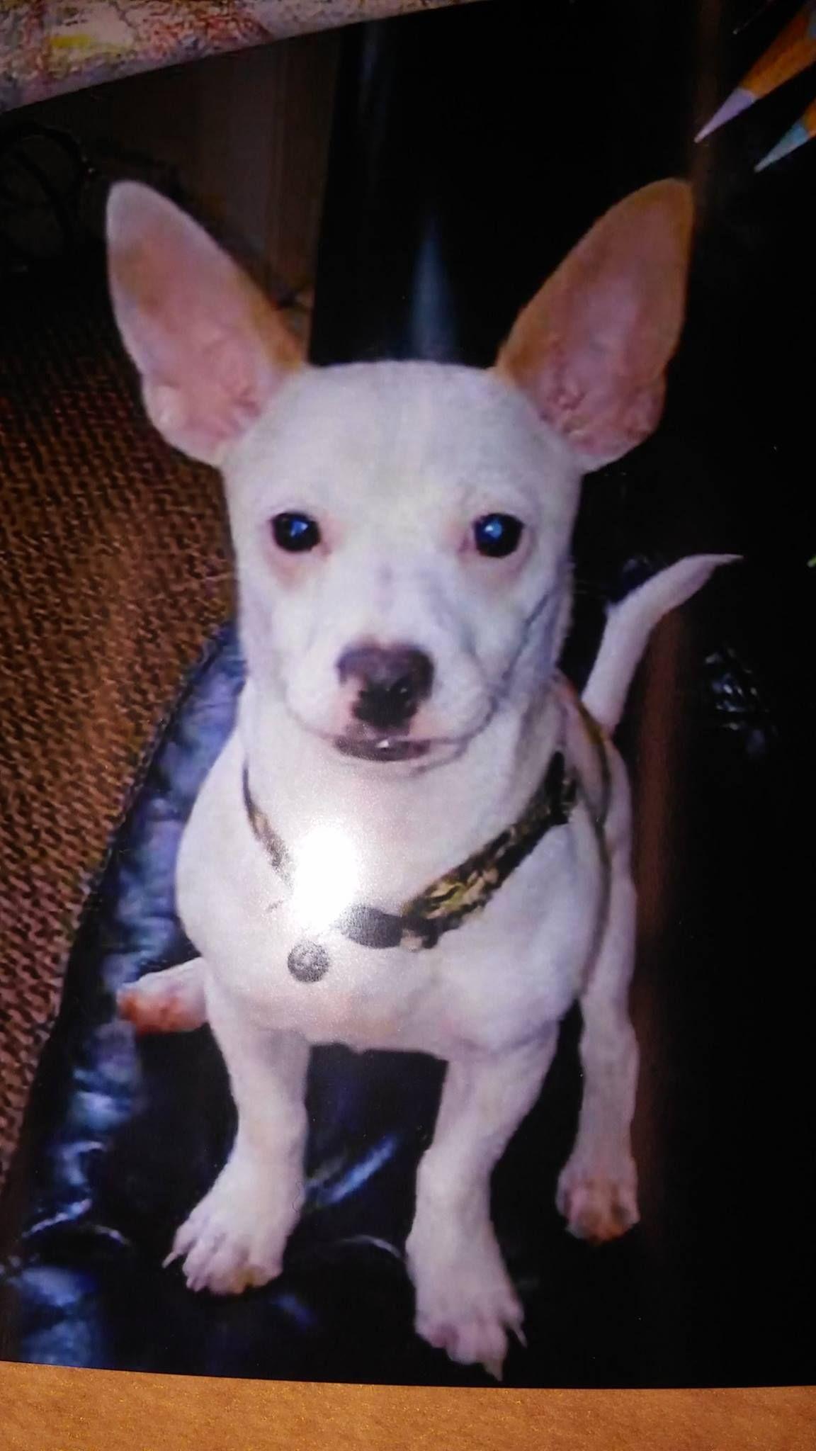 Luz Gonzalez Please help us find our Dog Jackie. He is...