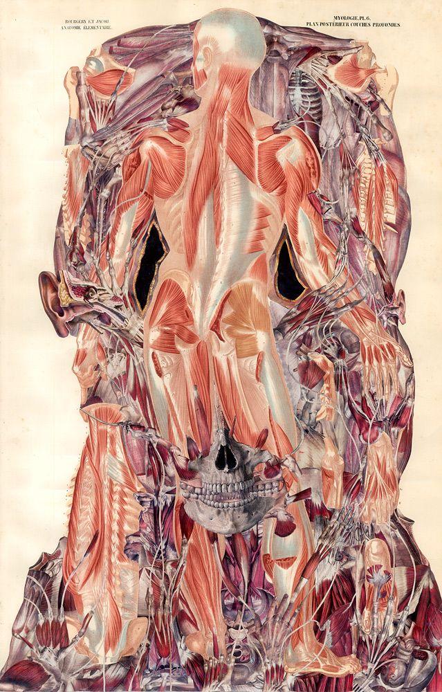 Balint Zsako. De Humanum. Albinus Fauna