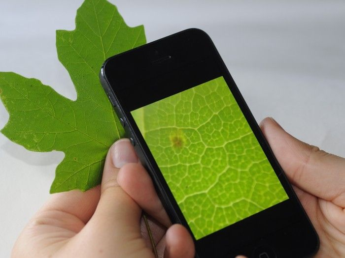 iPhone mikroskop