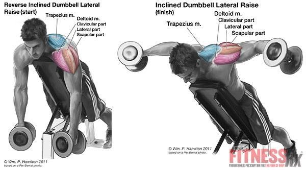 how to get round shoulders with dumbbells