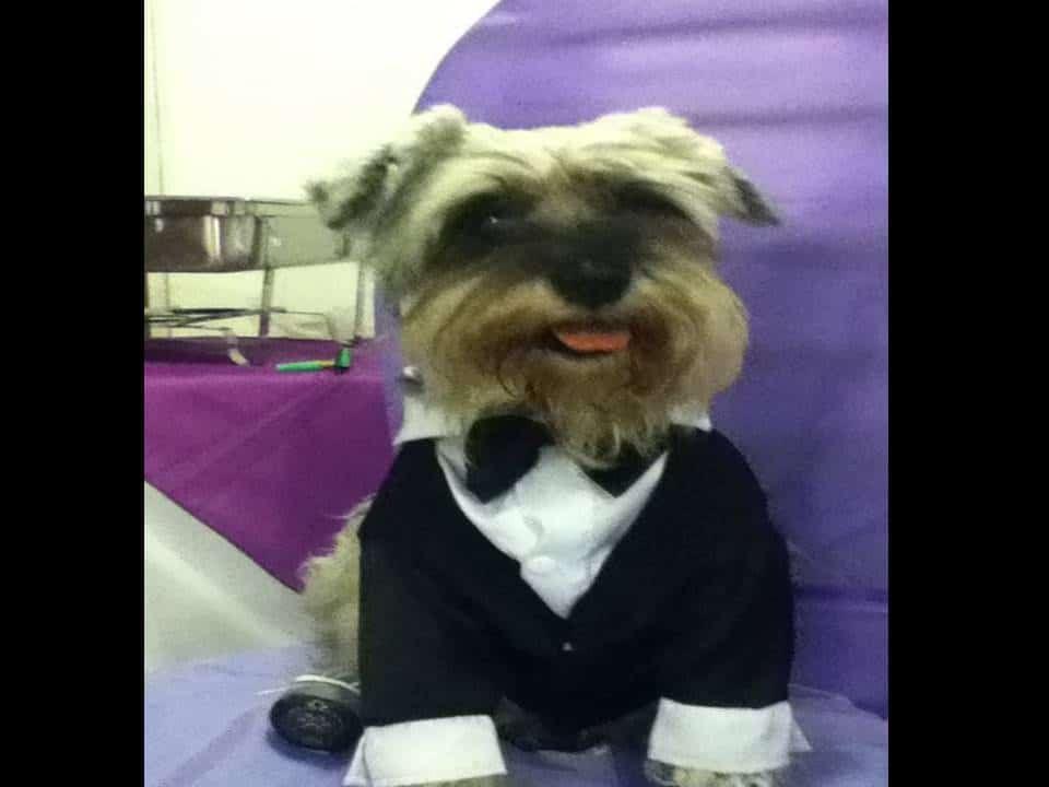 Como hacer traje para perros pequeños fácil y divertido | Mascotas ...