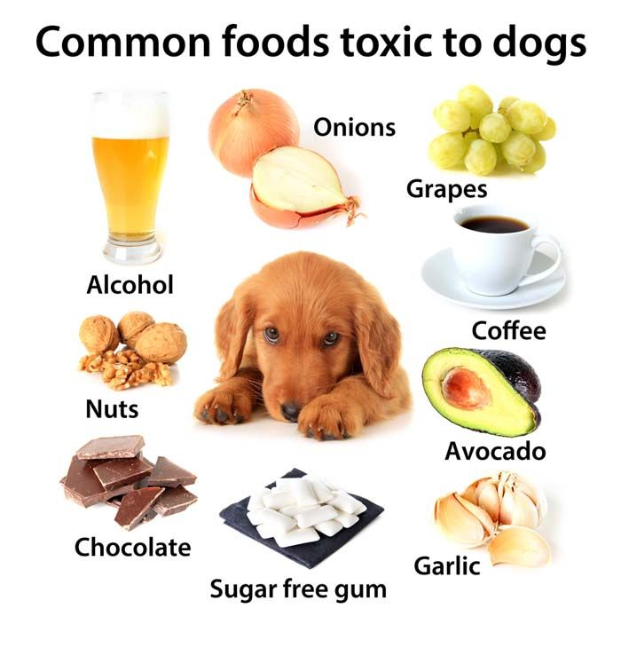 Foods Not To Feed Dogs And Cats