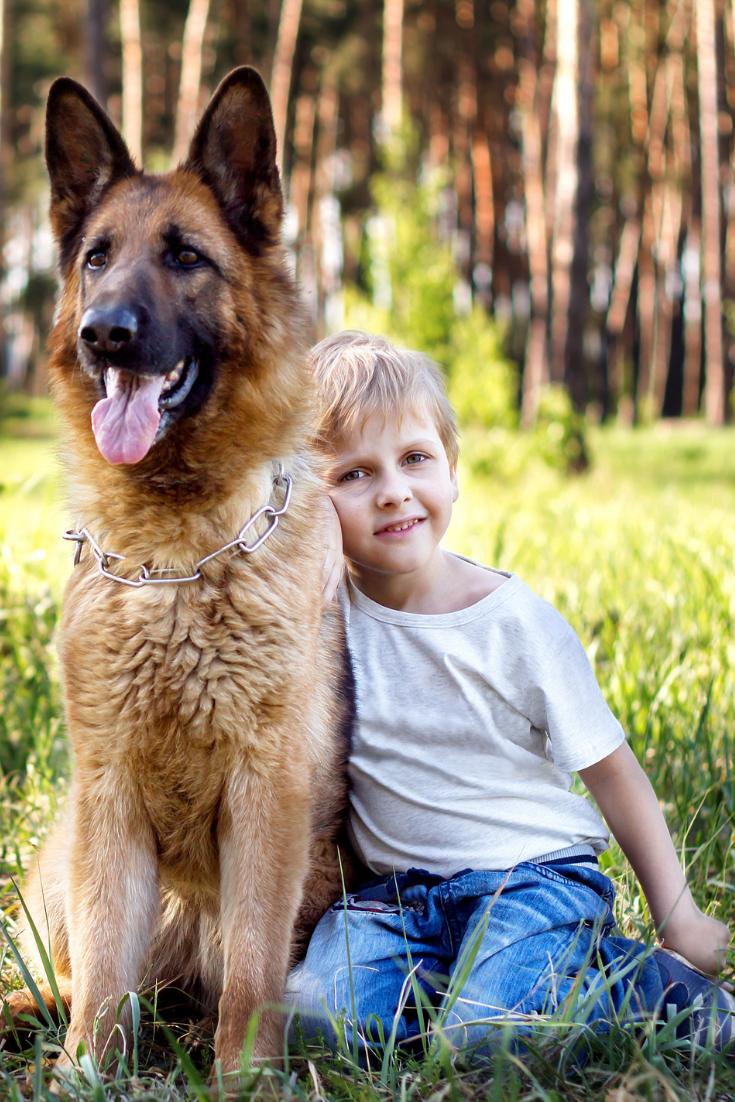Young Boy Relaxing And Walking With German Shepherd In Park Germanshepherd Dogs And Kids Baby Dogs German Shepherd