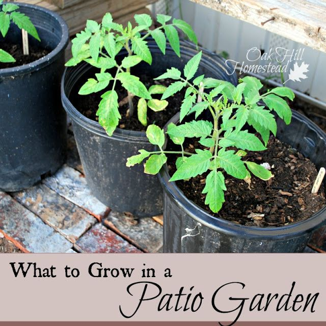 What to Grow in a Small Garden, be it patio or balcony or tiny yard.