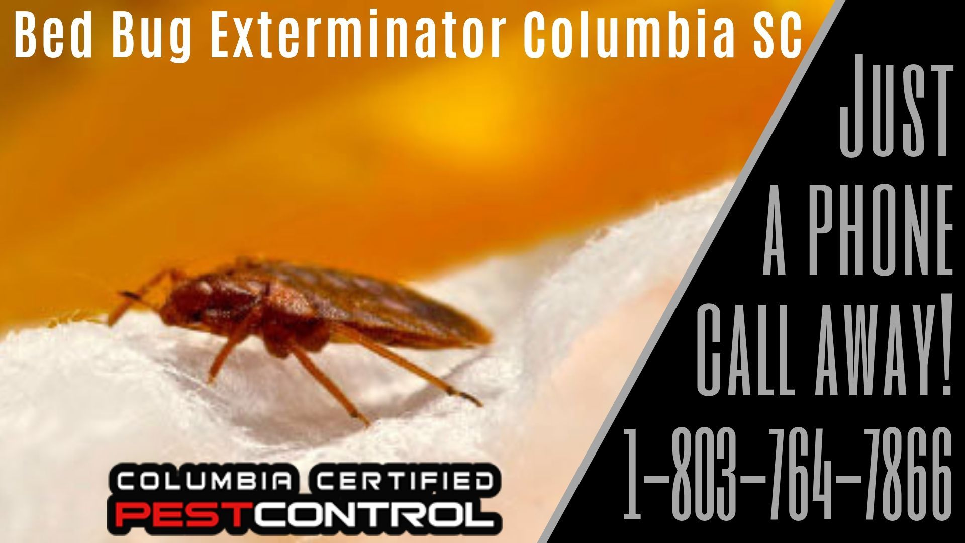 Bed Bug Exterminator Columbia Sc Bed Bugs Bed Bug Extermination Kill Bed Bugs