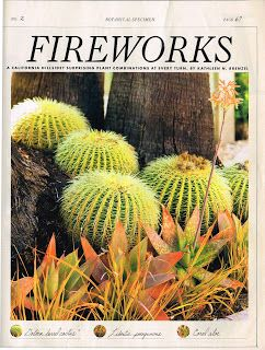 Ahhh, Lovely Idea For Drought Areas, Barrel Cactus At The Base Of Lofty  Palms