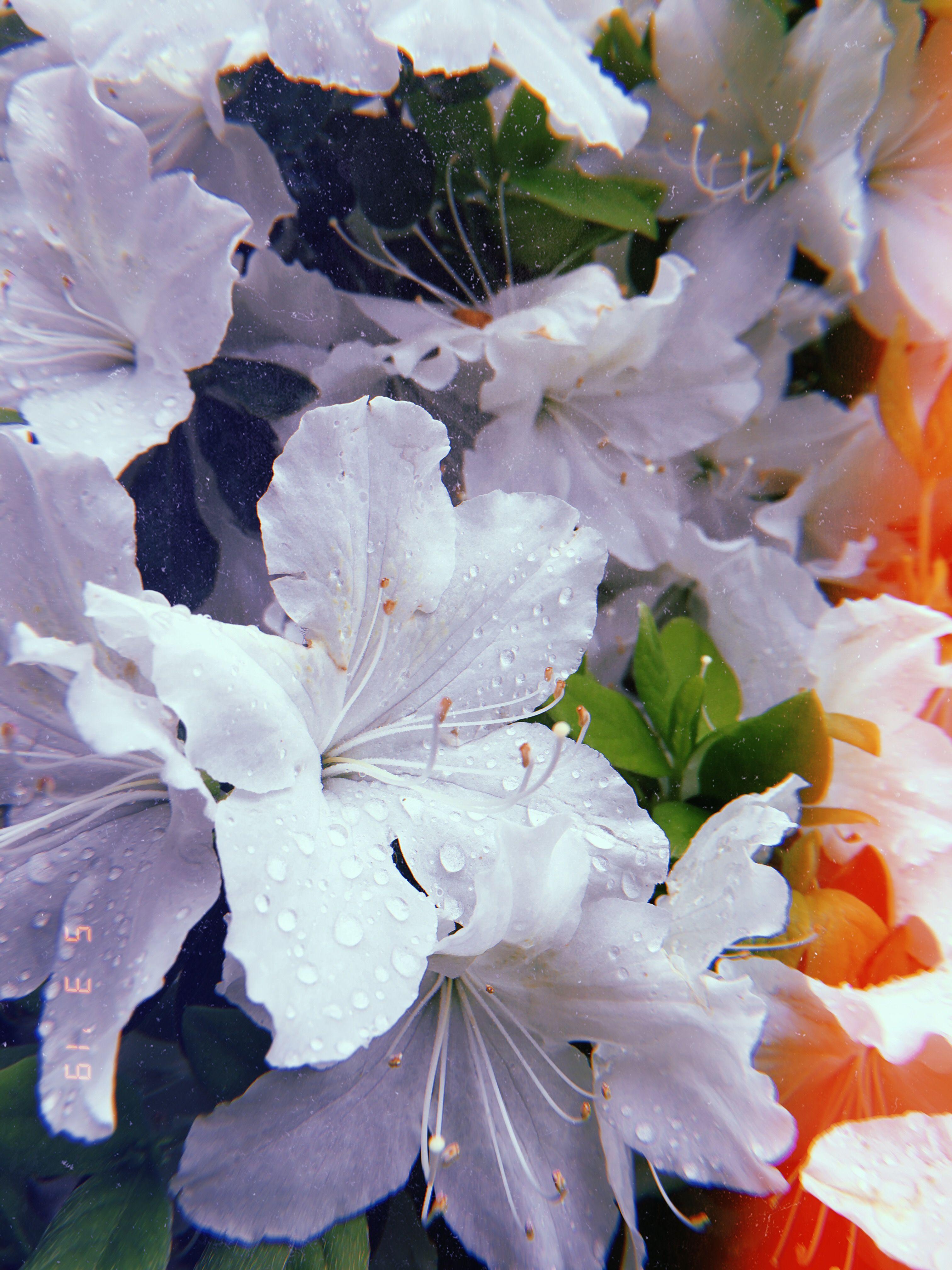 May flowers webcam