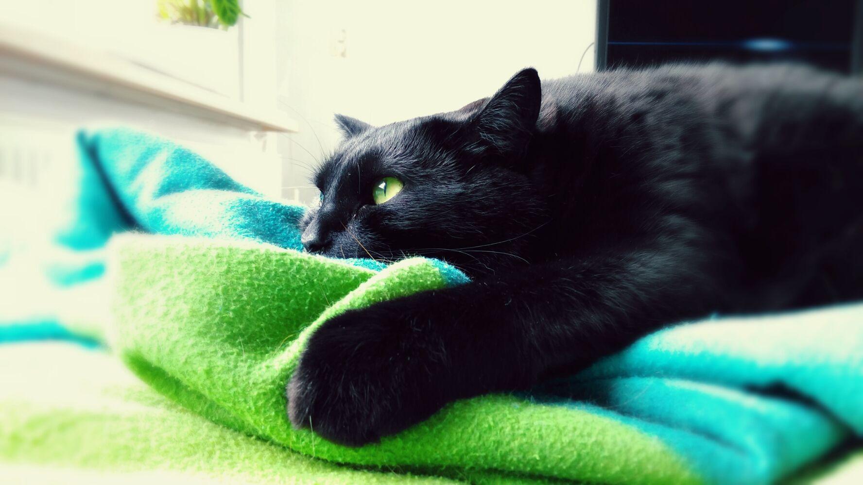 #cats #meow #dailyfluff #GijsTommieSam