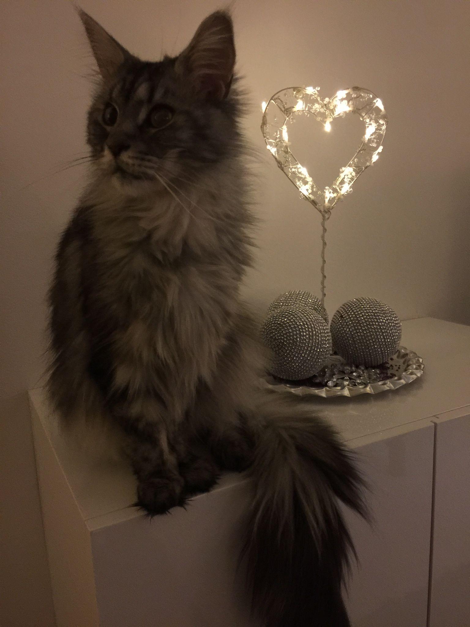 Pin van Cindy ^^=^^ Haagmans op christmas and cat's