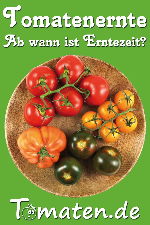 Wann Sind Brombeeren Reif : wann sind tomaten wirklich reif zum ernten wir zeigen worauf man achten sollte um wirklich ~ Watch28wear.com Haus und Dekorationen