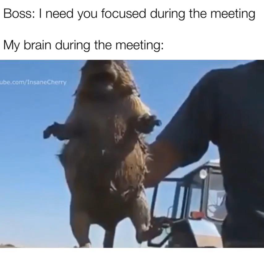 Animal Animals Pet Funny Animal Jokes Funny Animal Memes Stupid Funny Memes