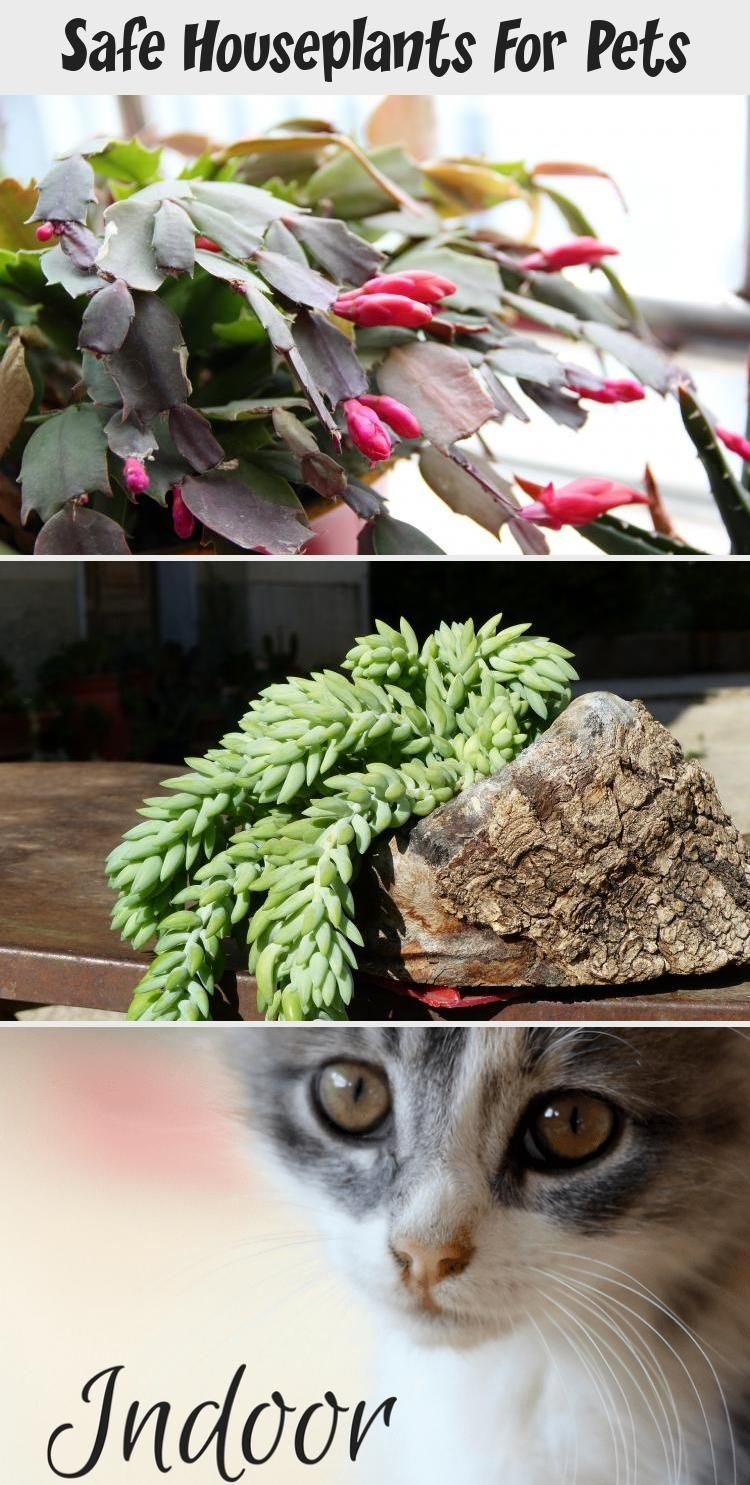 Indoor Plants that are Safe for Cats and Dogs #bathroomplantsIvy #bathroomplants...#bathroomplants #bathroomplantsivy #cats #dogs #indoor #plants #safe