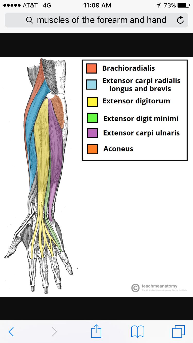 Pin de Nani Treglia en Anatomia | Pinterest | Anatomía, Apuntes y ...