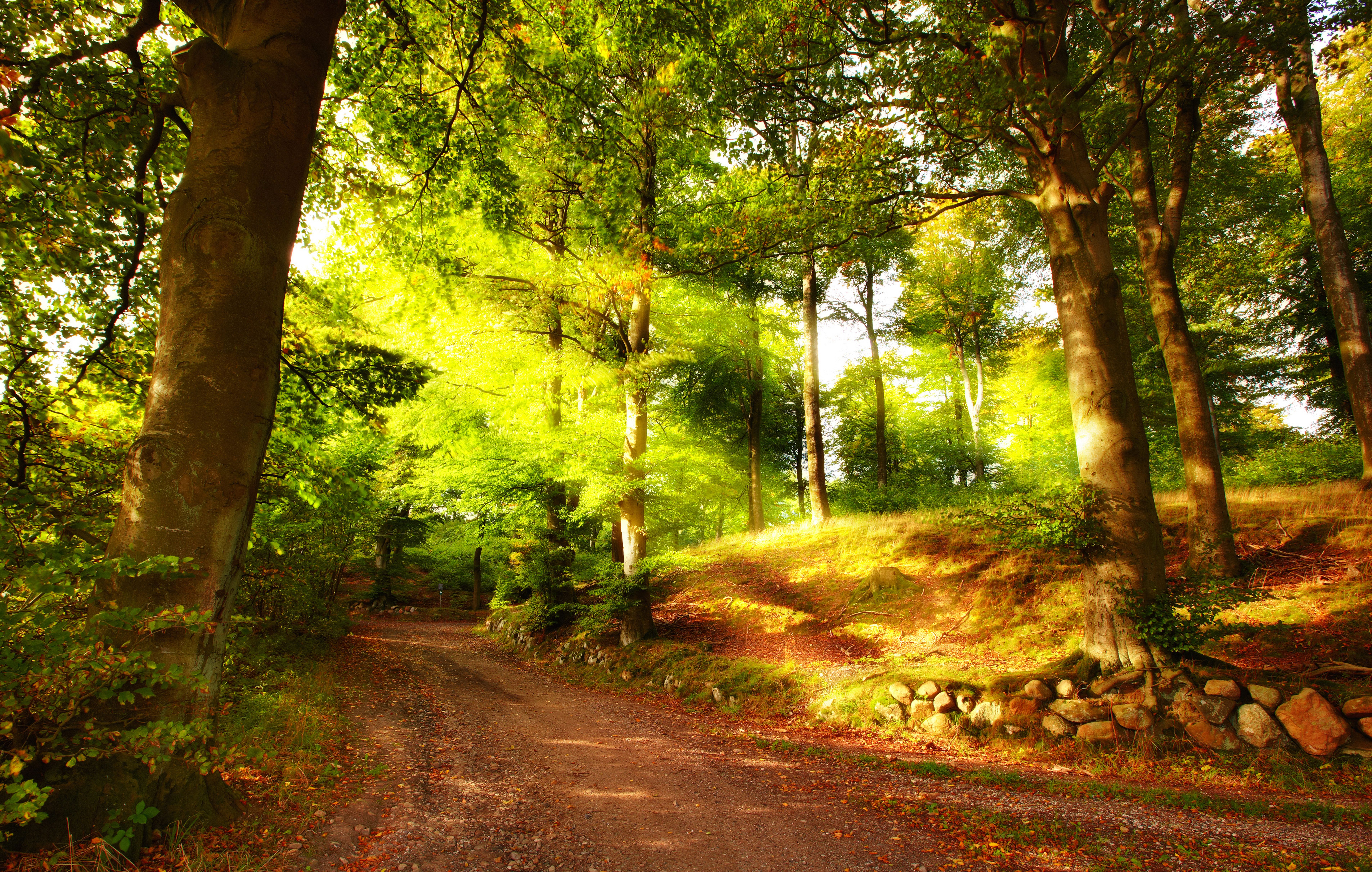 Summer Forest Images Wallpapers For Desktop 7622x4842 px