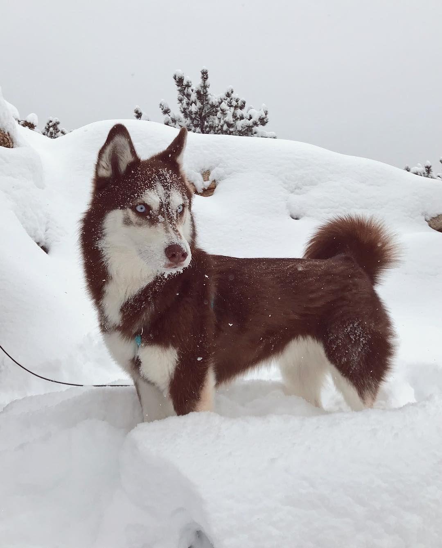 Cute Husky Pictures Dog Photos Dog Adventure Cute Husky
