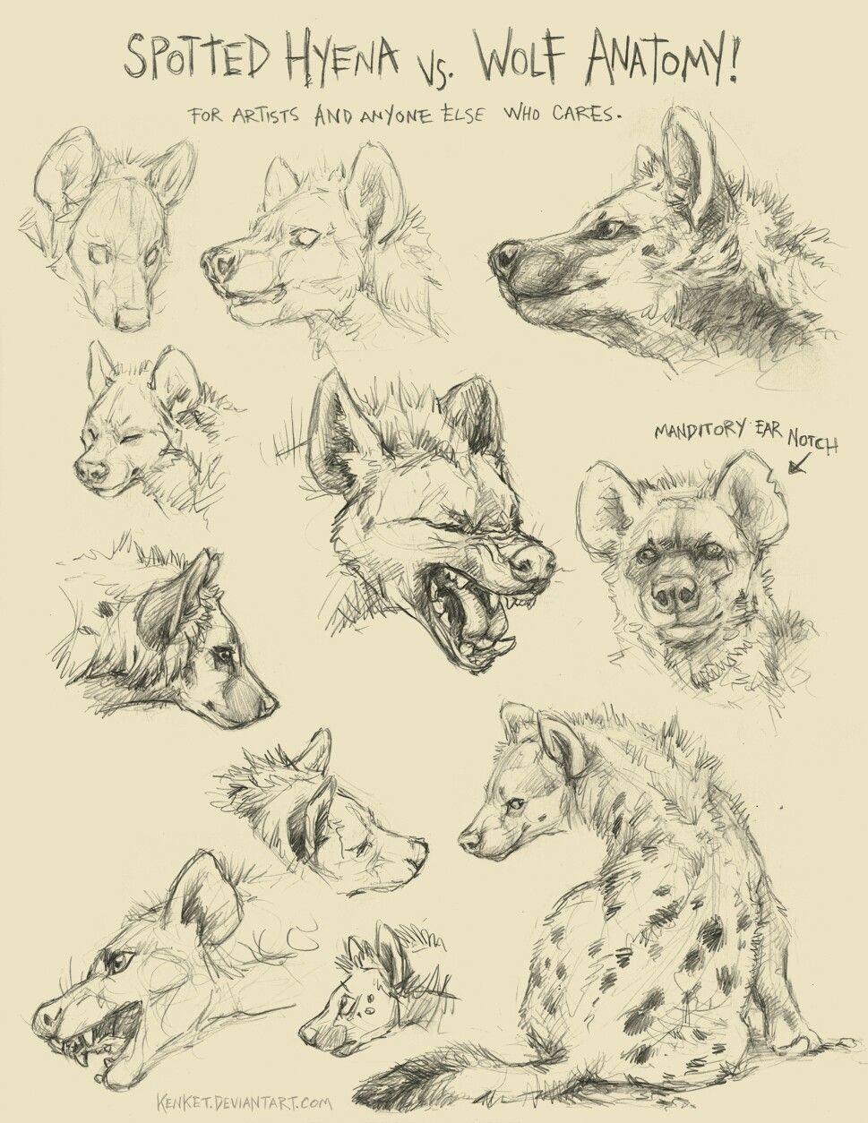 Learning to draw Freya\'s hyena form | workshop | Pinterest | Hyena ...