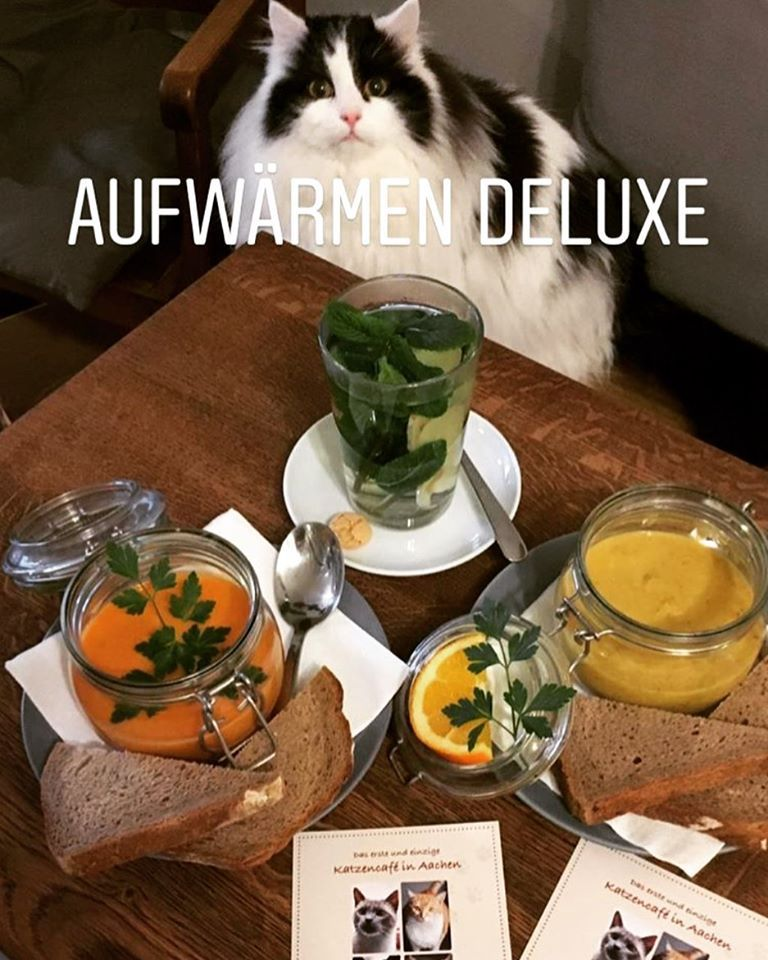 Pin Von Angelika Auf Katzen Cafe Katzen