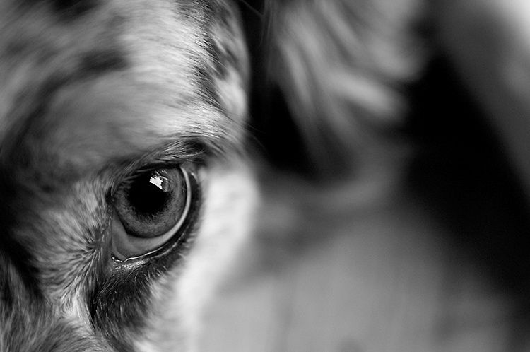 Black and white photographs close ups dog google search
