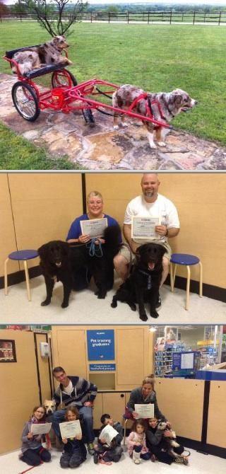 Dog Bathing Tips Dogs Socializing Dogs