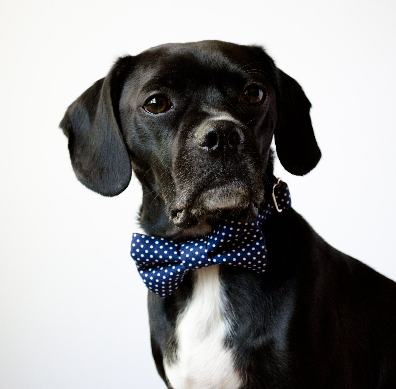 Supple Pup Dog Bow Tie Pet Dog Bow Ties Amazon Navy Blue Polka Dot Bow Tie Dog Via Etsy Yhave So Many Navy Dot Bowtie Dog Collar Dog Dog bark post Dog Bow Tie