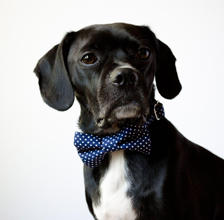 Navy Dot Bowtie Dog Collar | Dog collars, Dog and Pup