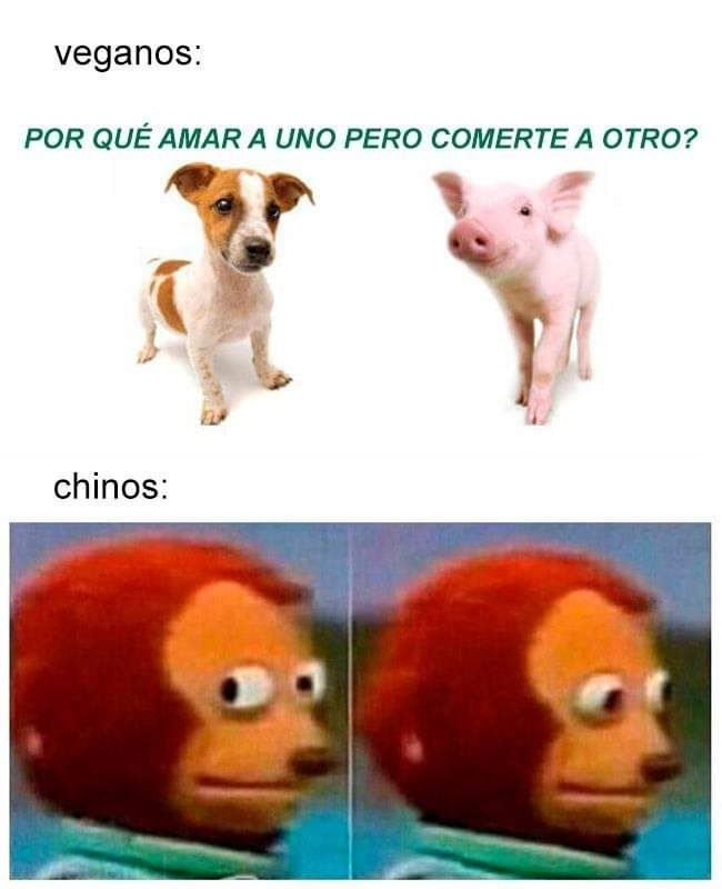 Mmmmmmm Cerdo Imagen Perro Vegano Best Funny Pictures Memes Things To Sell