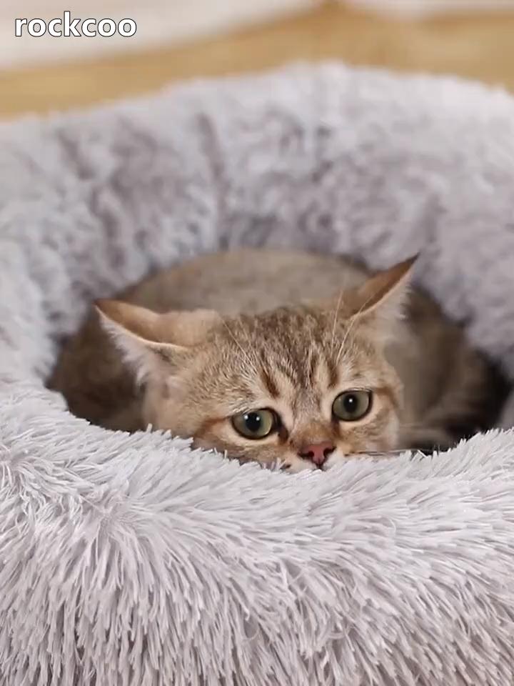 Photo of Cómoda cama de perro suave y elástica de alto estiramiento para mascotas