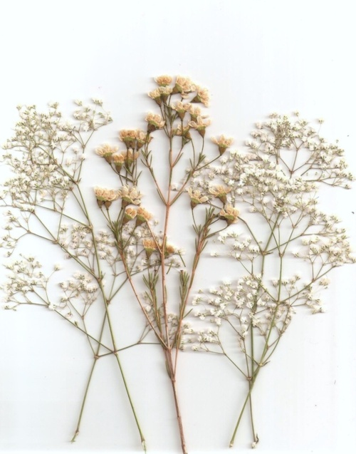 So Pretty Flowers Photography Flower Aesthetic Dried Flowers