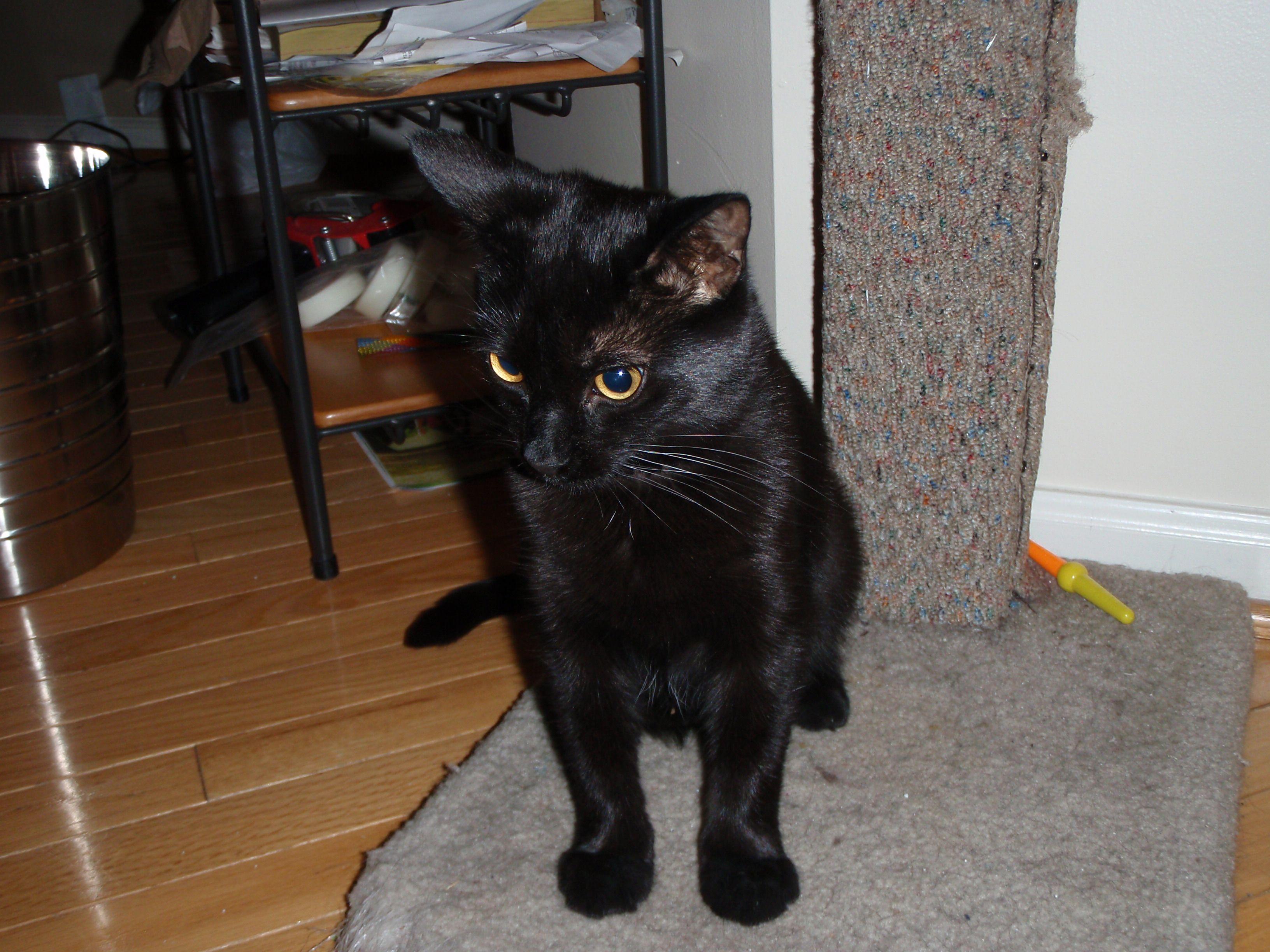 Saiyoko Cats, Animals