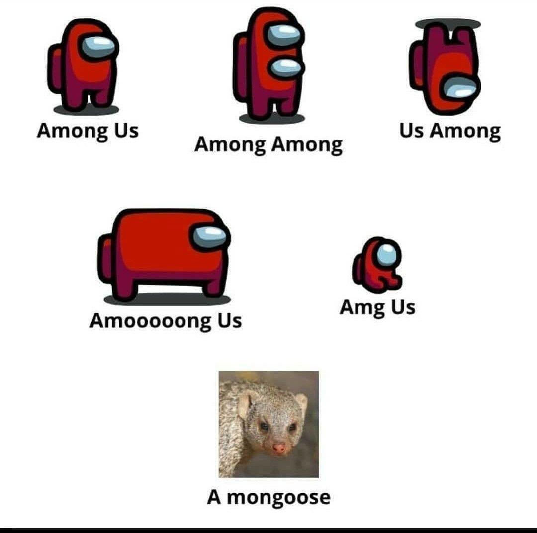 Among Us Mongoose Really Funny Memes Stupid Funny Memes Funny Memes