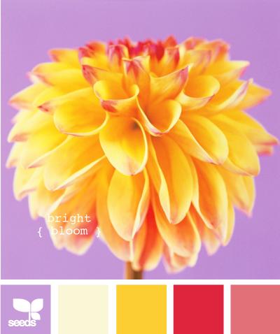 bright bloom