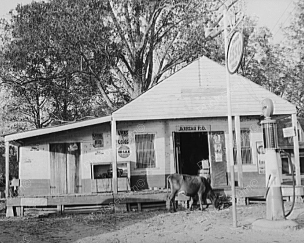 Cow At Esso Gas Station & General Store 8x10 Reprint Of