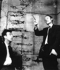 James Watson And Francis Crick With Their Dna Model Libro Della Vita Grandi Libri Dna