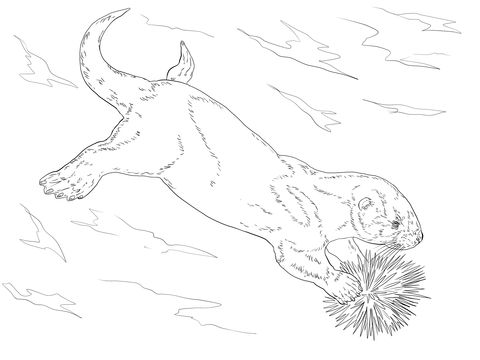 Sea Otter Eating Sea Urchin Coloring Page Free Printable Coloring Pages Coloring Pages Bird Coloring Pages Animal Coloring Pages