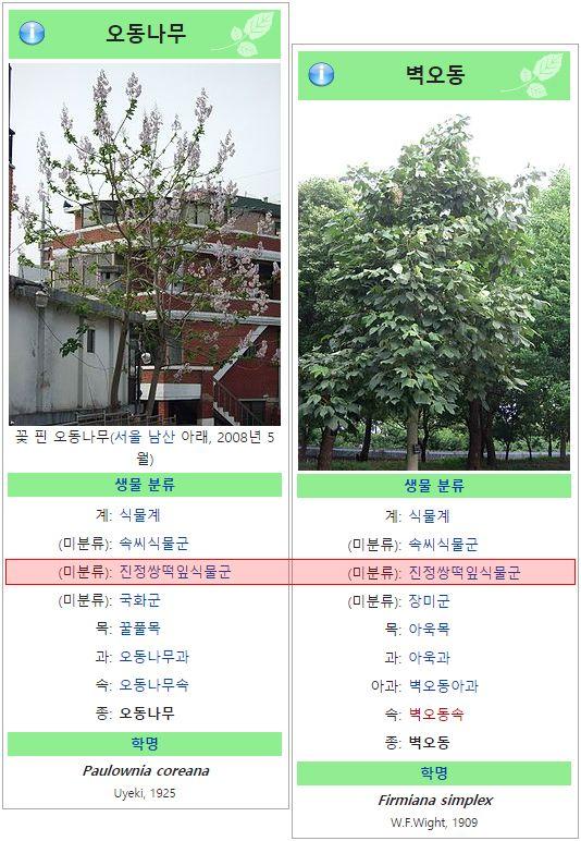 오동나무-벽오동나무 비교