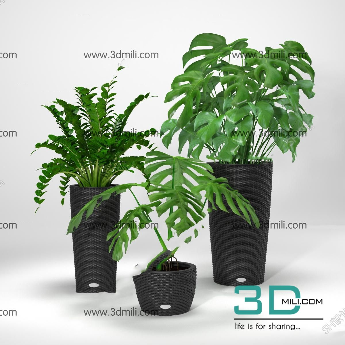 401  Plant 3dsmax Model Free Download - 3D Mili - Download 3D Model
